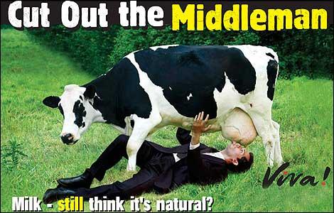 краве-мляко-вреда