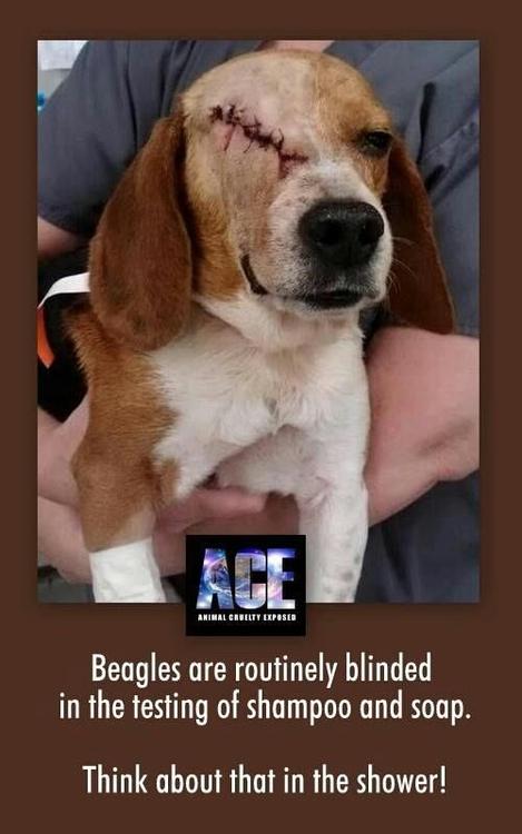 beagle-testing
