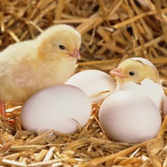 Защо не ям… яйца