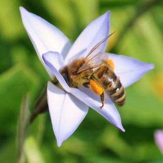 Защо не ям… мед